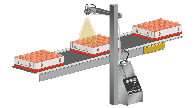 spray misting peaches on conveyor